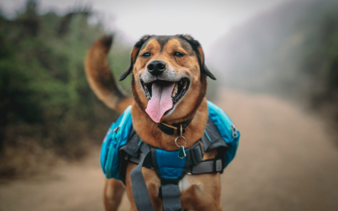 10 Reasons You Should Be Hiking With Your Dog