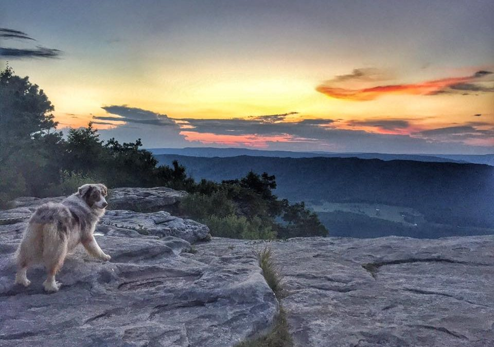 Backpacking With Dogs: Little Things That Make A Big Difference