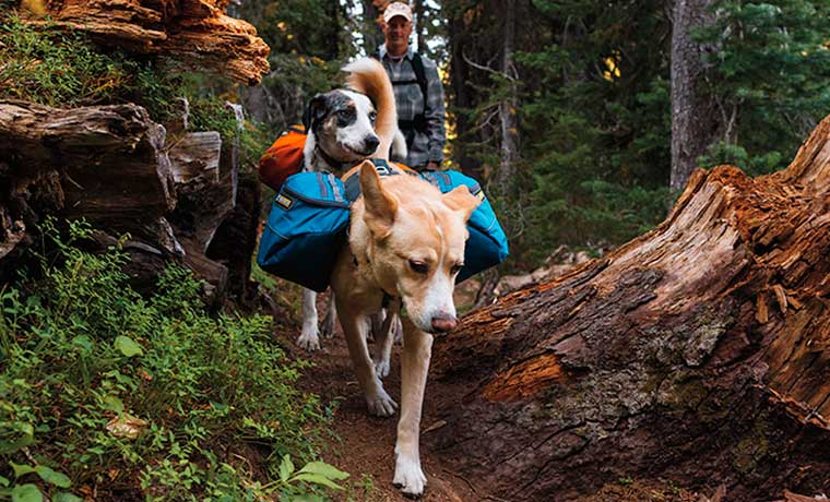 Backpacking with Dogs: A Practical Guide
